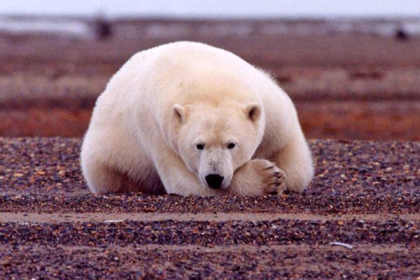 cambiamento climatico, cop24