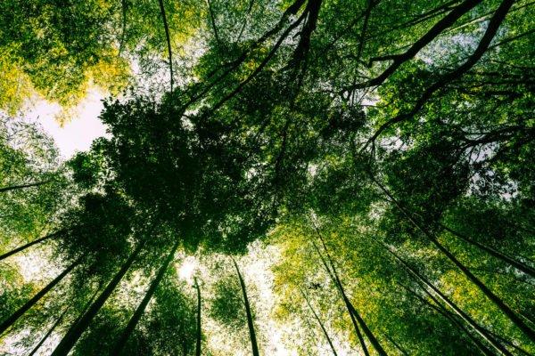alberi science