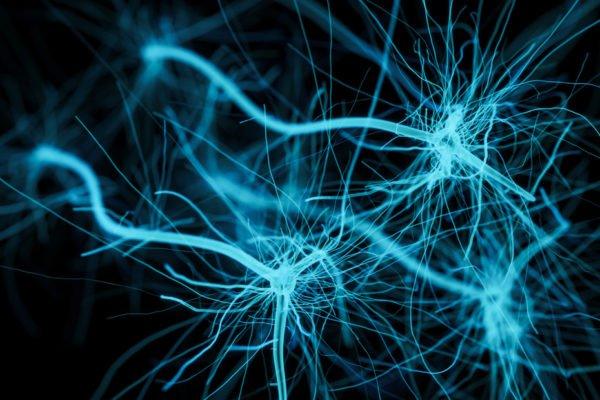 mini cervello - organoidi cerebrali
