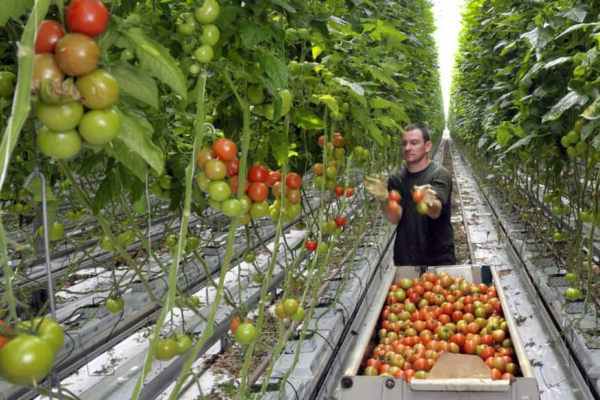 Agricoltura Paesi Bassi